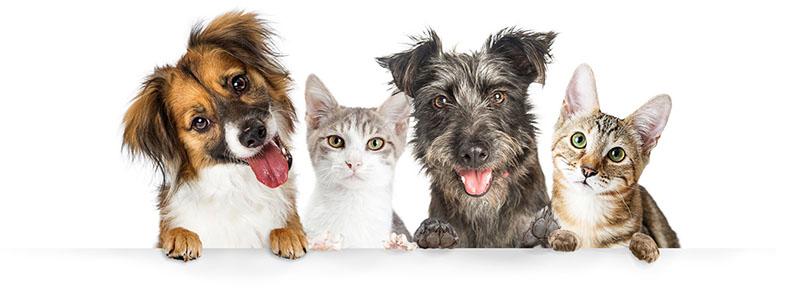 Ритуальные услуги для кошек и собак